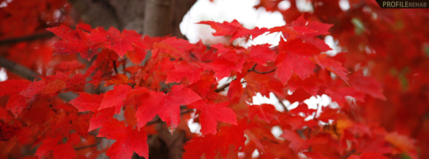 Red Fall Leaves Timeline Cover - Beautiful Picture of Fall Leaves ...