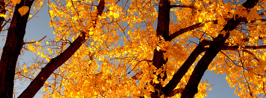 Free Fall Facebook Covers for Timeline, Pretty Autumn Season Timeline