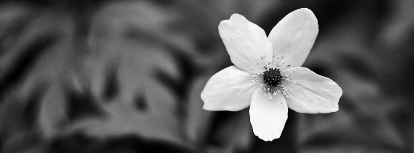 black_white_flower_cover_18.jpg (850×315)