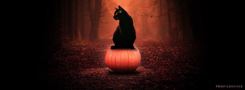 Black Cat Pumpkin Images for Facebook Cover - Halloween Black Cat on Pumpkin -  Oct Event Day 18