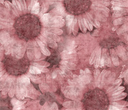Pink Flower Wallpaper - Pink Sunflower Wallpaper Background